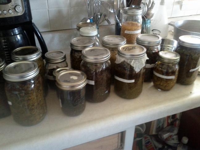 Making Weight-to-Volume Tinctures – Old Ways Herbal: Juliette