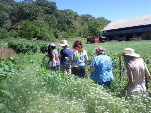 Medicinal Herb Gardening Intensive at Old Ways Herbal